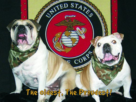 Happy birthday to the marines bulldog marines blank note cards happy birthday to the marines bulldog marines blank note cards bookmarktalkfo Gallery