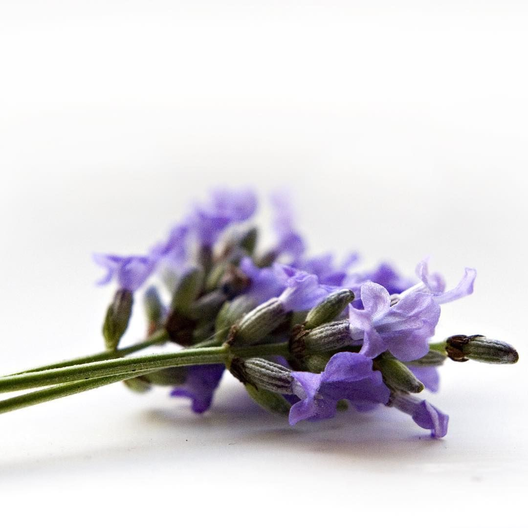 Love lavender? So do we! We use it in our Nail & Cuticle Oil, Spa ...