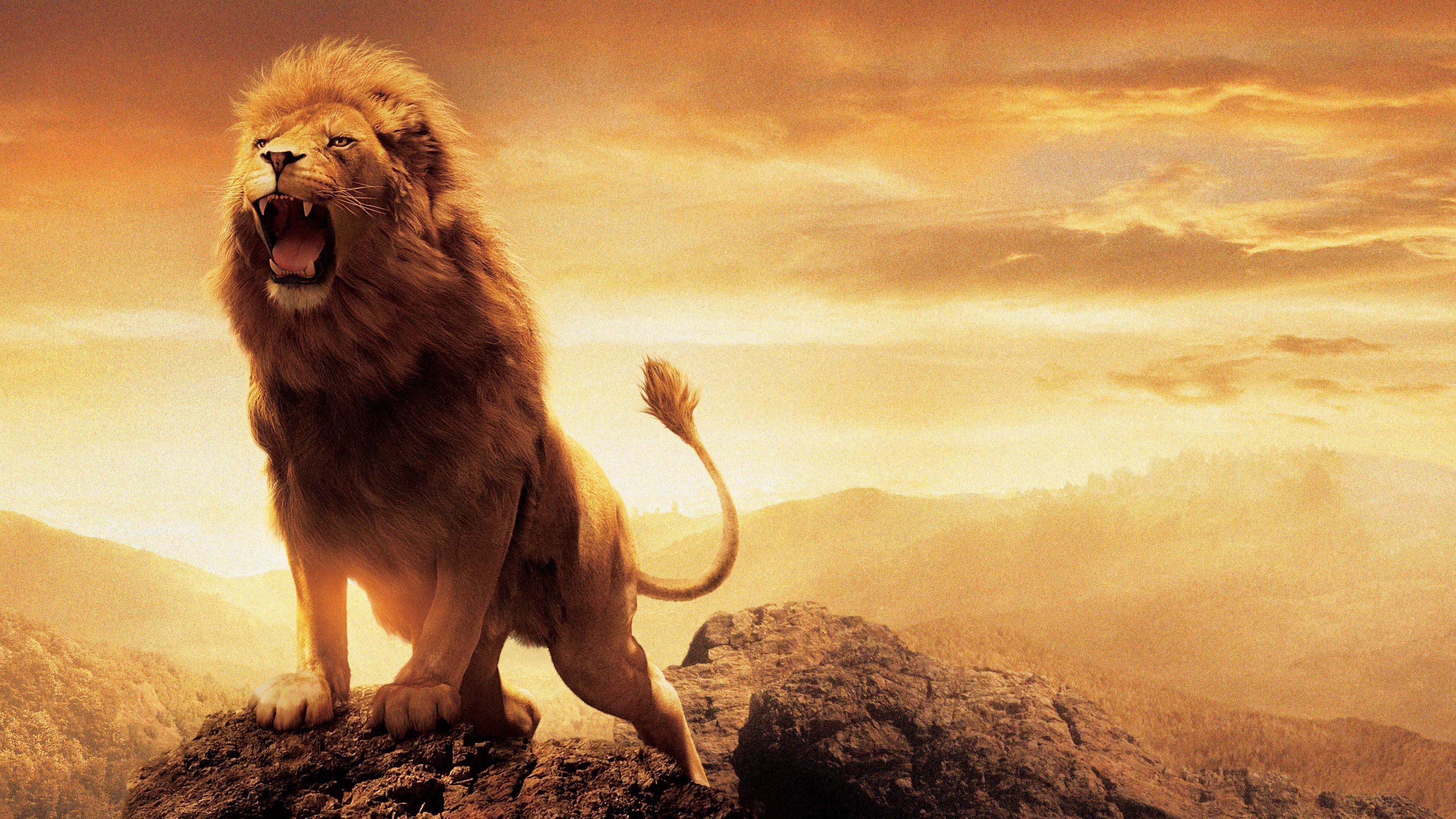 Lion Wallpaper By Shingala Avi On List Lion Live Wallpaper Lion