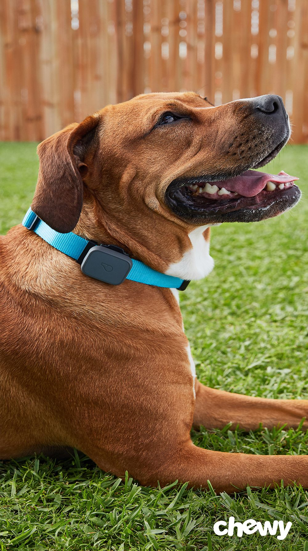 Whistle 3 Dog & Cat GPS Tracker & Activity Monitor allows