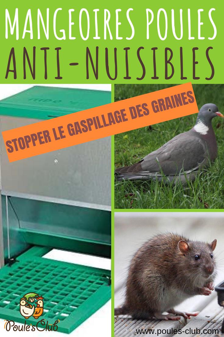 Mangeoire Poules Anti Nuisibles Et Anti Gaspillage Mangeoire Poule Mangeoire Poule