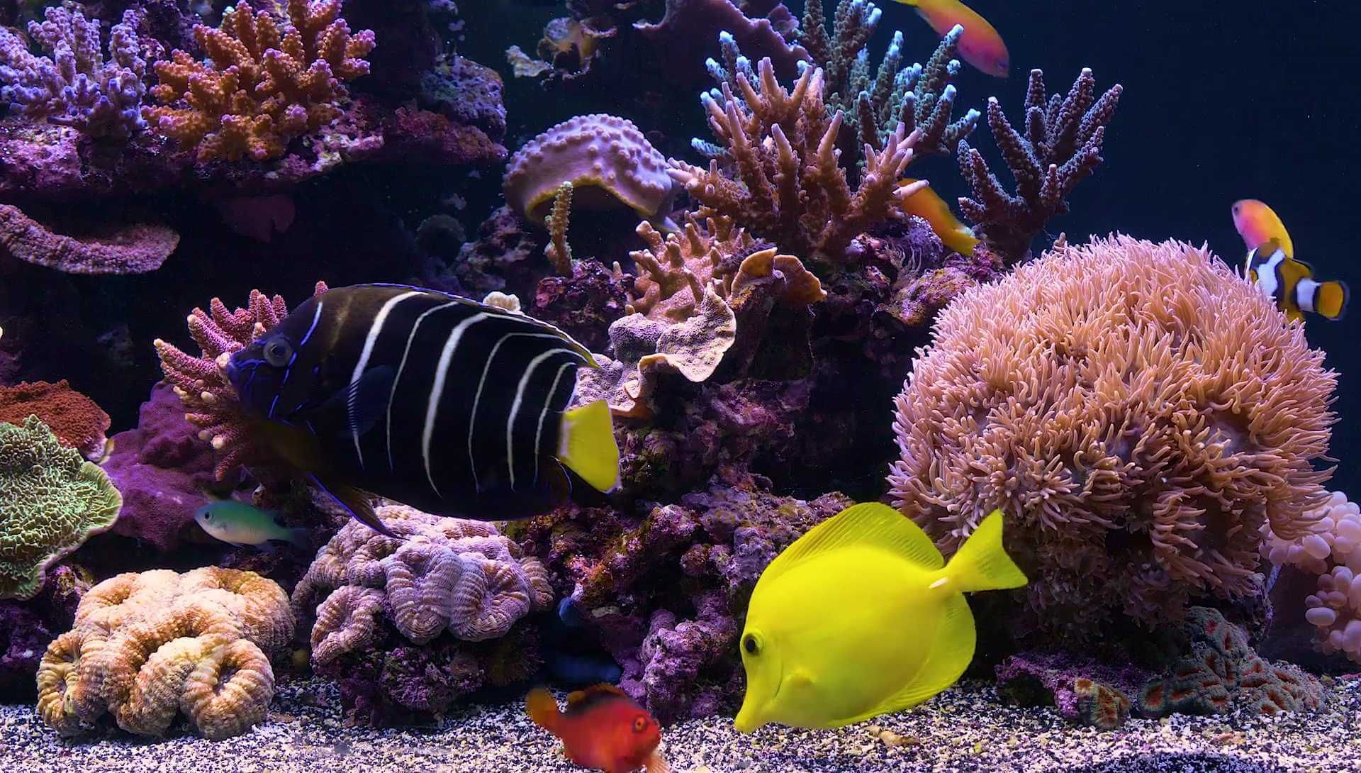 Marine Aquarium Screensaver In 4k Or Hd You Choose For Ultra Tv Screens To Make Your Television A Virtual Any Computer