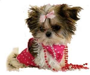 F65523c131c1deb3735077e5ba10f18d Jpg 249 300 Yorkshire Terrier Yorkie Yorkie Puppy
