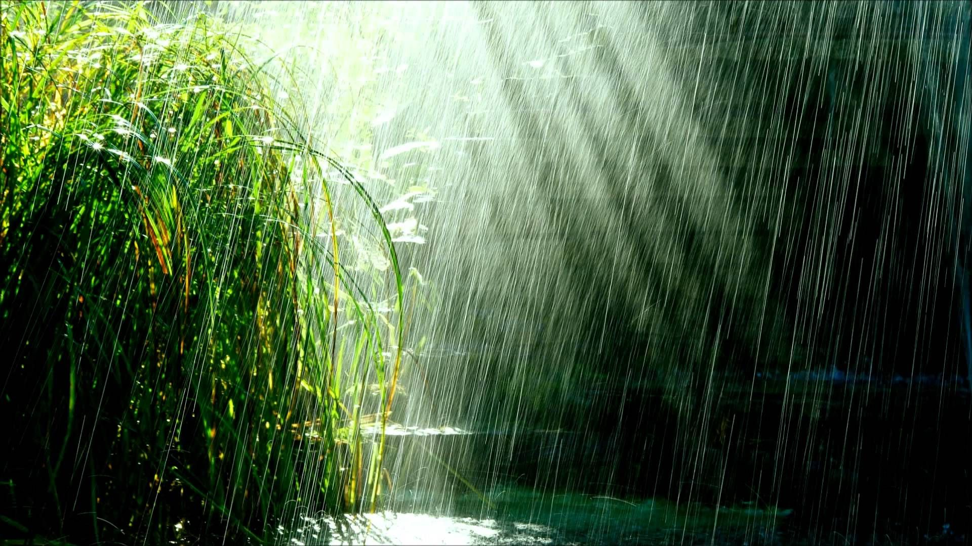 Tropical Storm Relaxing Tropical Rain With Birds Chirping Rain Wallpapers Computer Wallpaper Landscape Art