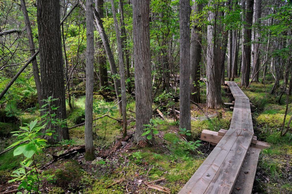 Trail through the atlantic white cedar swamp at forsaith