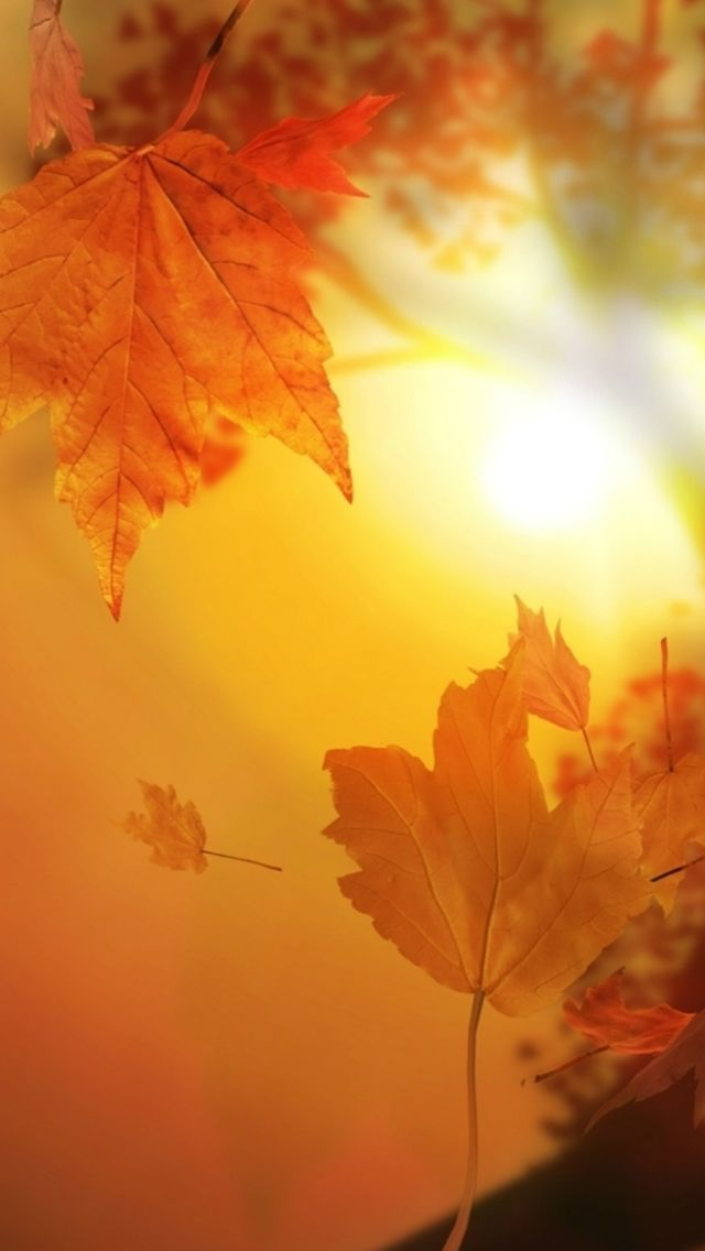 Beautiful Autumn Falling Yellow Leaves Sunshine IPhone 5s Wallpaper