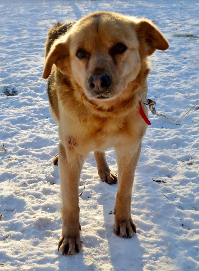 Adopt Nora on Shepherd mix dog, Adoption, Dogs