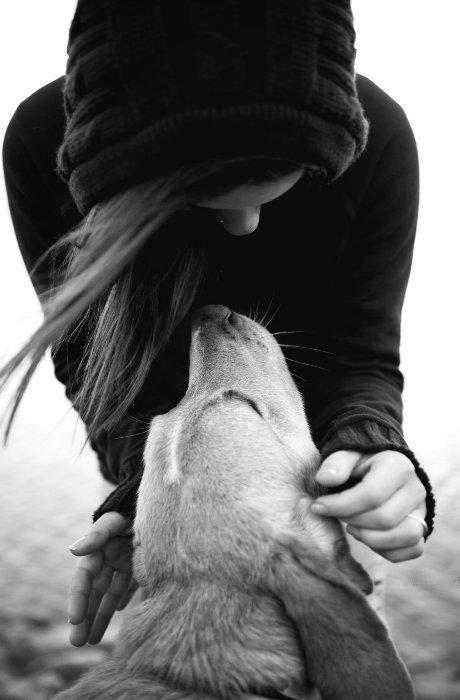 Friendship Dog Quotes Puppy Love Dog Love