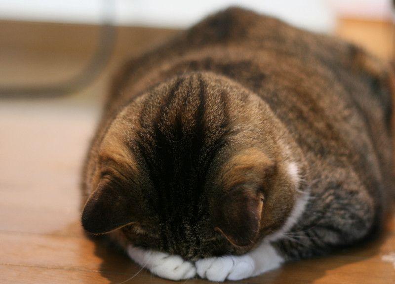 cat, sleep, sorry