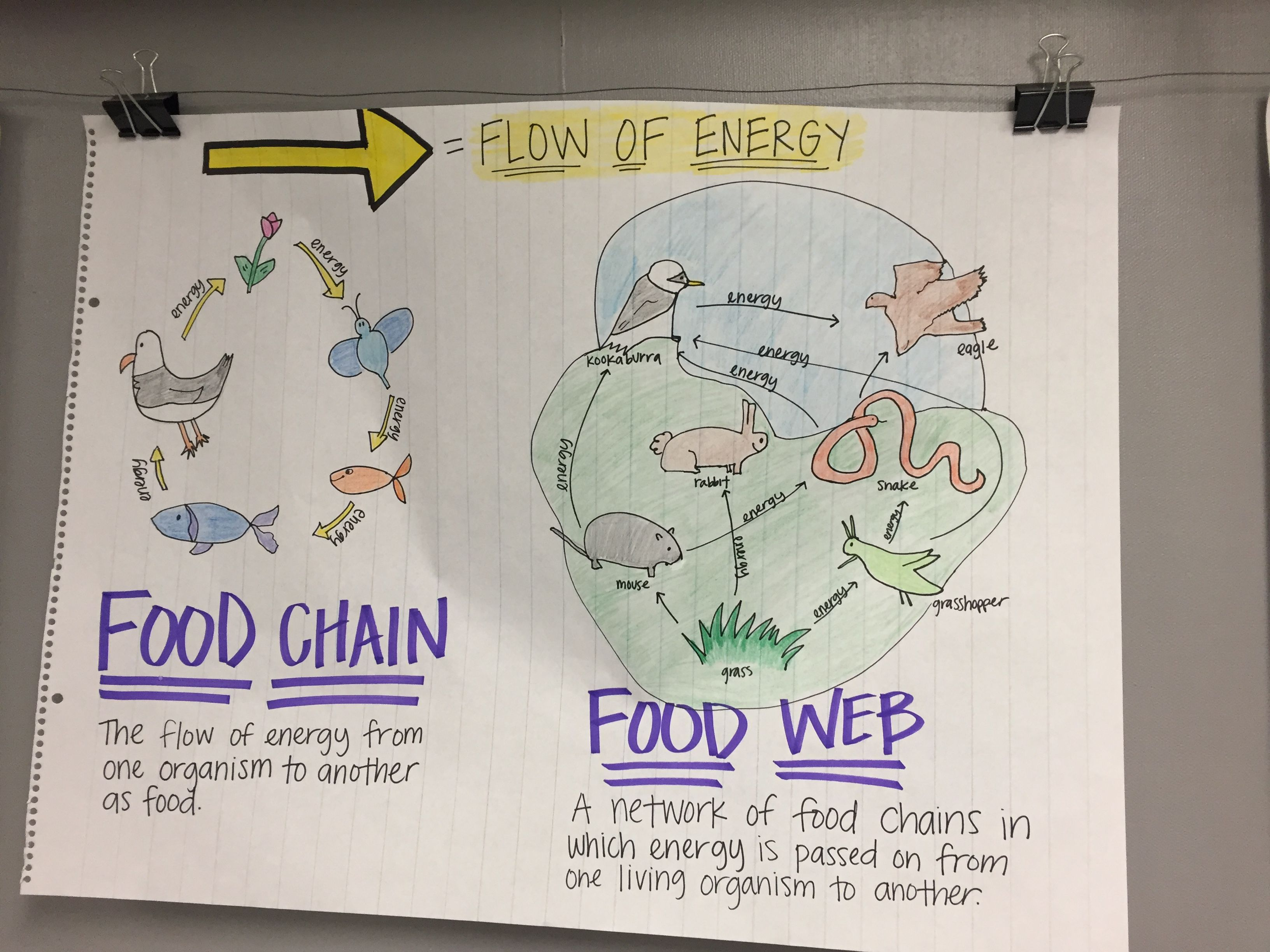 Food Chain Anchor Chart Science anchor charts, Food
