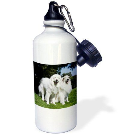 3dRose Two Great Pyrenees dogs in California - US05 ZMU0308 - Zandria Muench Beraldo, Sports Water Bottle, 21oz