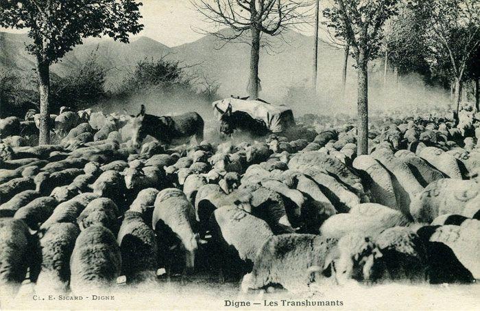 """""""Digne - Les Transhumants"""". Cl. E. Sicard, Digne. Anni 1910."""