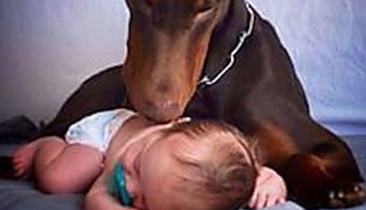 Diy Homemade Dog Food Recipe Dogs Family Dogs Sleeping Dogs