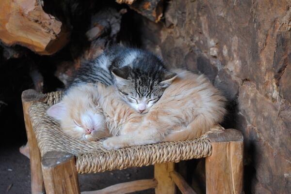 A pair of sleeping kittens. pic.twitter.com/y6rwKx2md3 via @EmrgencyKittens