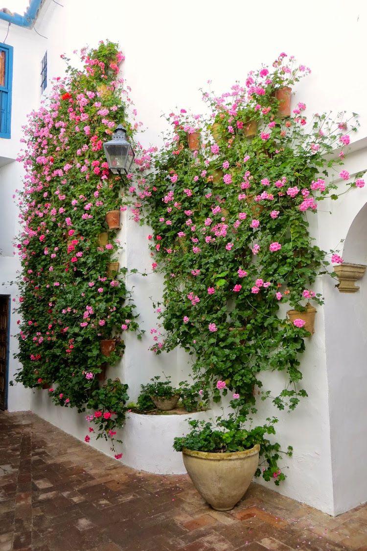 Pflanzen Gegen Muecken Hausmittel Geranien Mediterran Prachtvoll