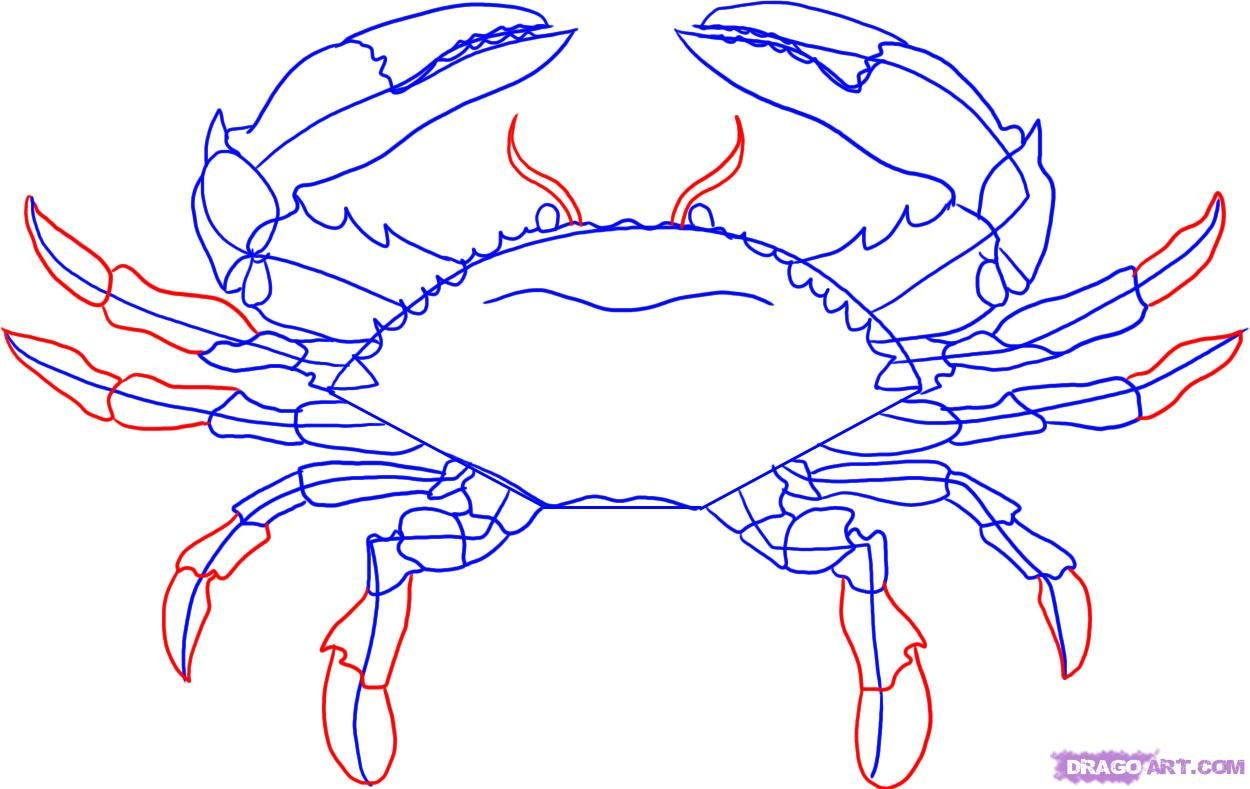 How To Draw A Crab By Dawn Crab Art Crab Painting Blue Crabs Art