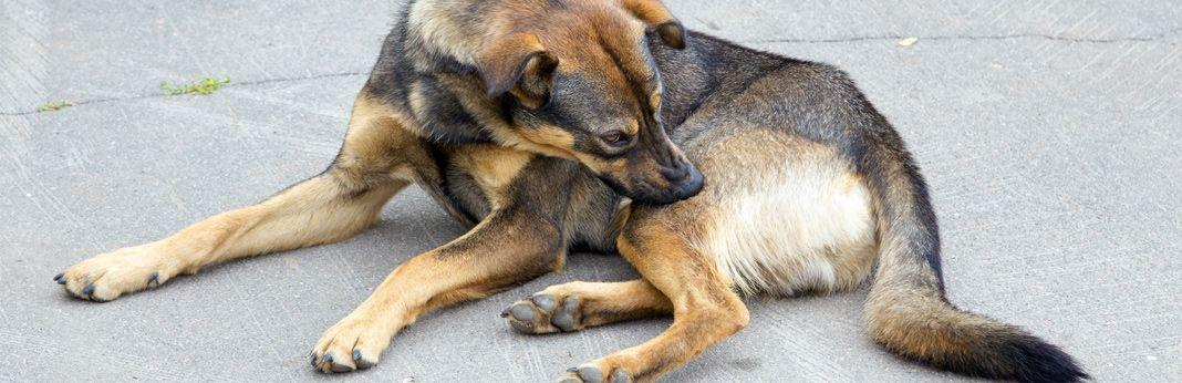 kangaroo dog food for allergies