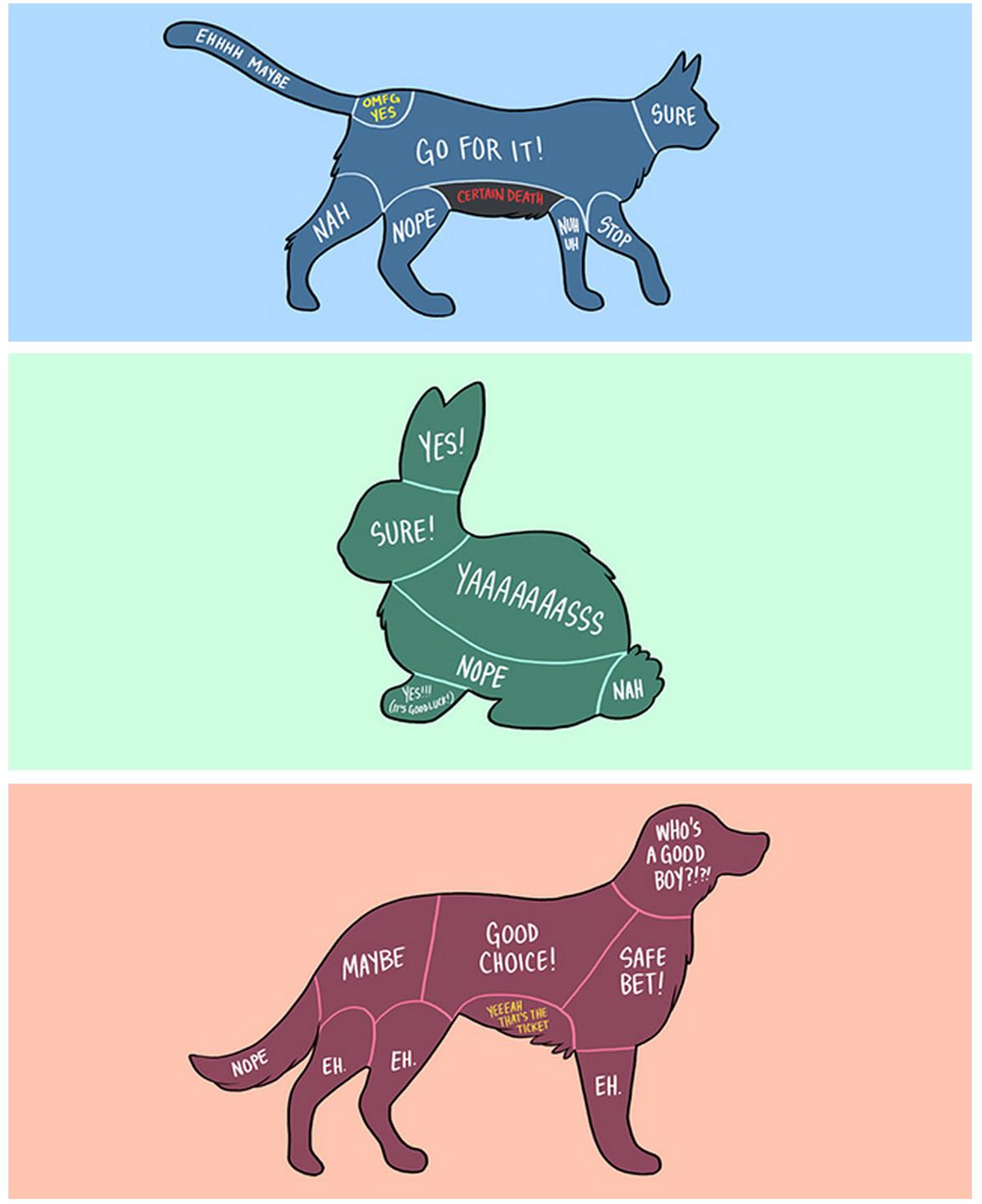 Pet me Pets, Cute animals, Funny animals