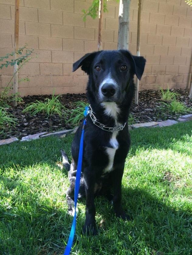 Adopt Benson On Petfinder Labrador Retriever Dog Retriever Dog Dogs