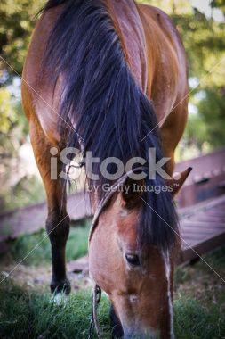 Horse Country, comiendo y pensando en primer en la cámara