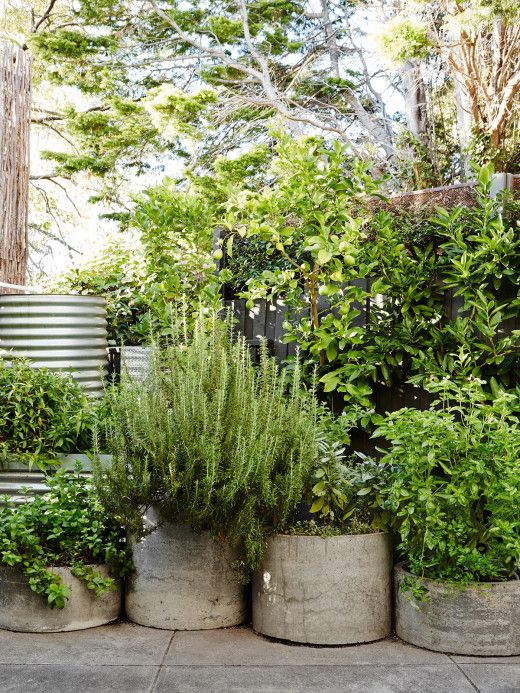 Brian and Trish Perkins is part of Potted plants outdoor, Herb garden design, Urban garden, Garden containers, Garden pots, Plants - A low maintenance Melbourne garden inspired by mid century architecture
