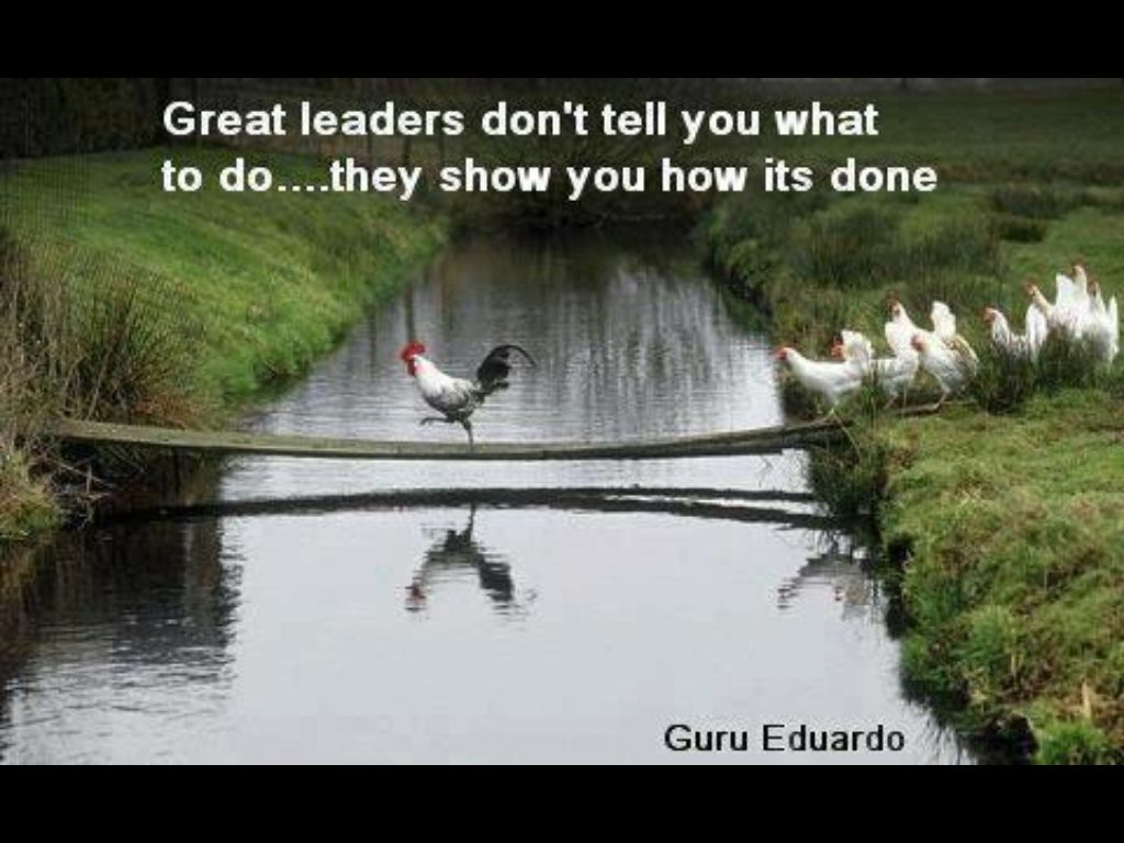 Chickens Good Quotes: Wisdom, Work Quotes