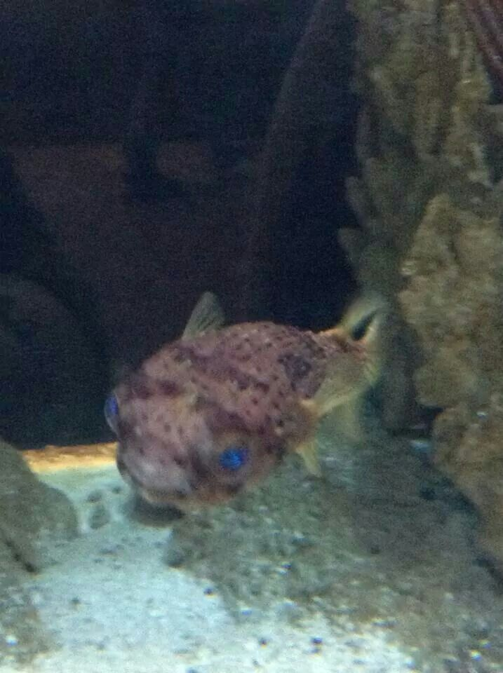 Cool looking fish :) (With images) | Fish, Pets, Fish pet