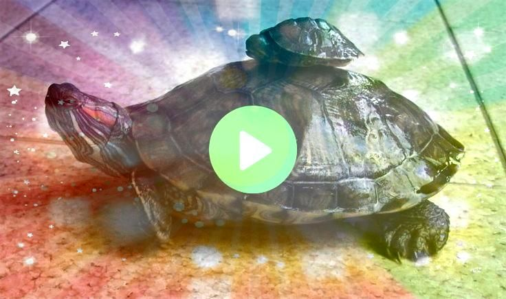 Pictures turtles pet red eared slider Strategies Boys and girls employ   Terrific Pictures turtles pet red eared slider Strategies Boys and girls employ  Terrific Picture...