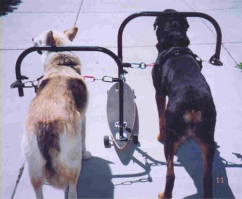 Dog Powered Scooter Diy Google Search Diy Dog Stuff Dog