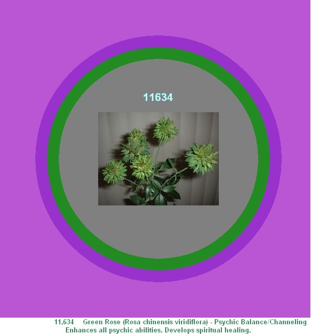 11634 Green Rose Rosa Chinensis Viridiflora Psychic Balance Channeling Enhances All Psychic Abilities Develops Spiri Healing Codes Healing Flower Essences