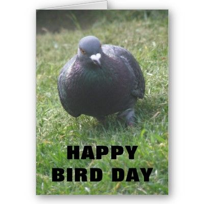 This Pigeon Wishes You A Happy Birthday If Its Your Birthday Of