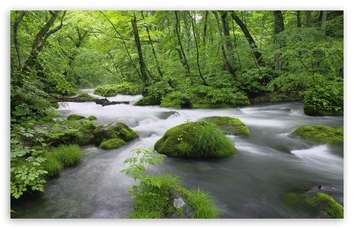 Download Forest River, Japan HD Wallpaper imagens
