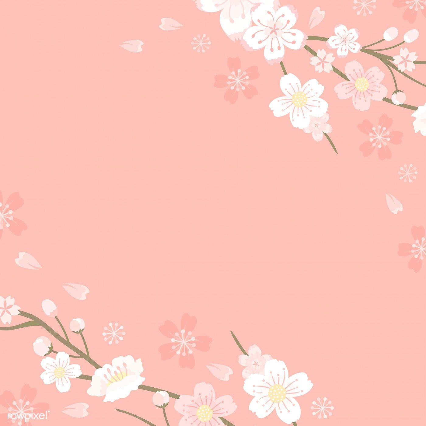Pink Cherry Blossom Blank Background Vectot Free Image By Rawpixel Com Manotang Anime Cherry Blossom Flower Background Wallpaper Cherry Blossom Background