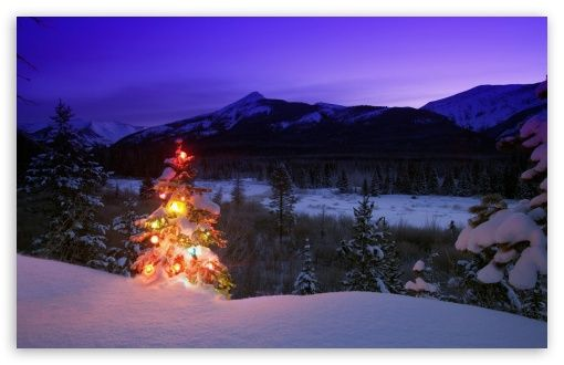 Download Christmas Tree With Lights Outdoors In The... HD