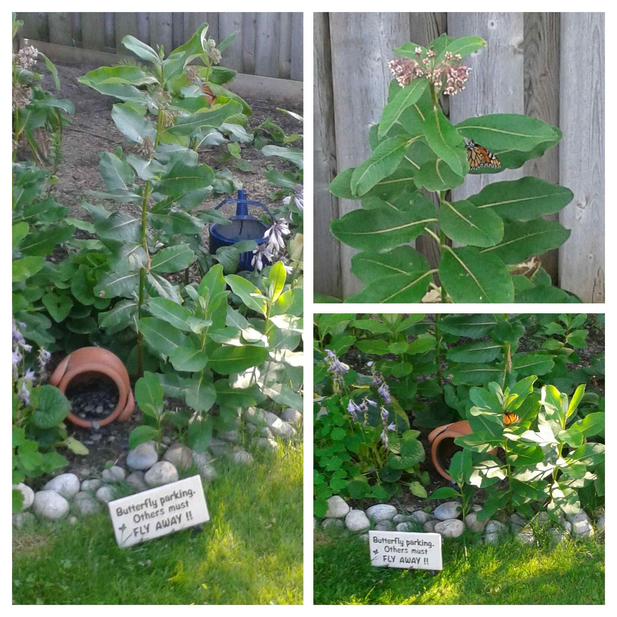 Funny Decorative Garden Sign \