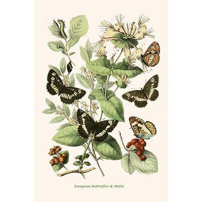 Buyenlarge European Butterflies And Moths By W F Kirby Graphic Art Size Nature Art Prints Butterfly Art Botanical Art