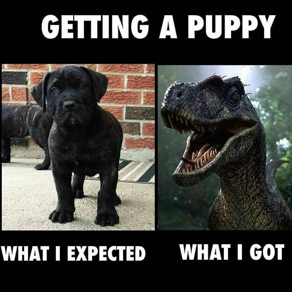 Getting A Puppy What I Expected Vs What I Got My Little Girl