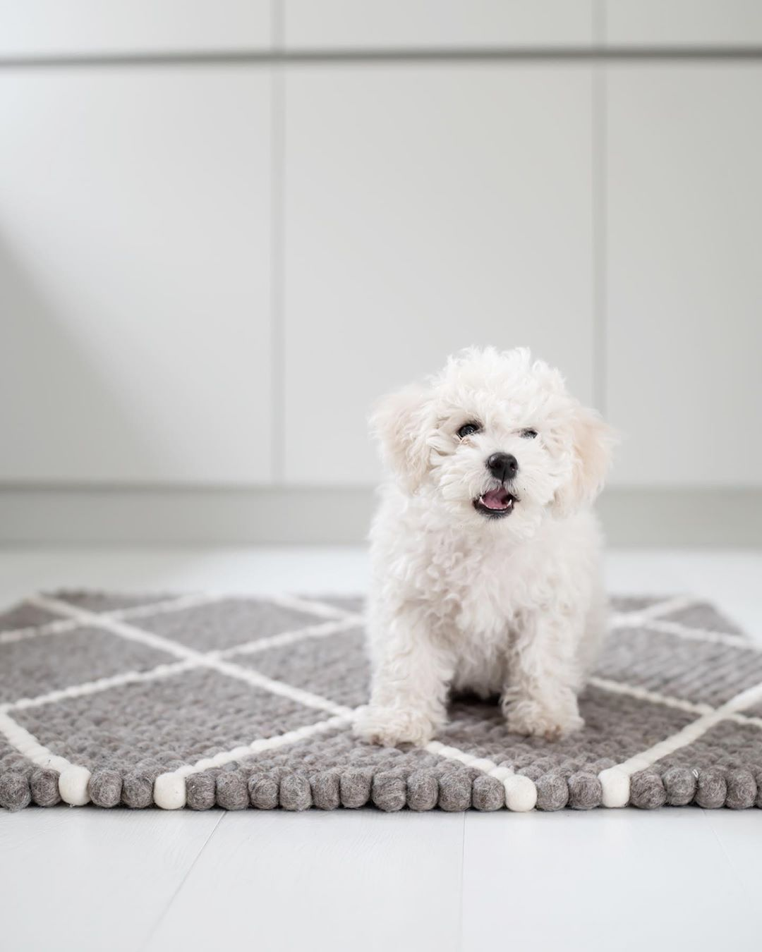 New The 10 Best Home Decor With Pictures Hi Im New Here Uusi Perheenjasenemme Esittaytyy 10 Viikkoinen Koiranp Decor Interior Design Home Art Home Goods