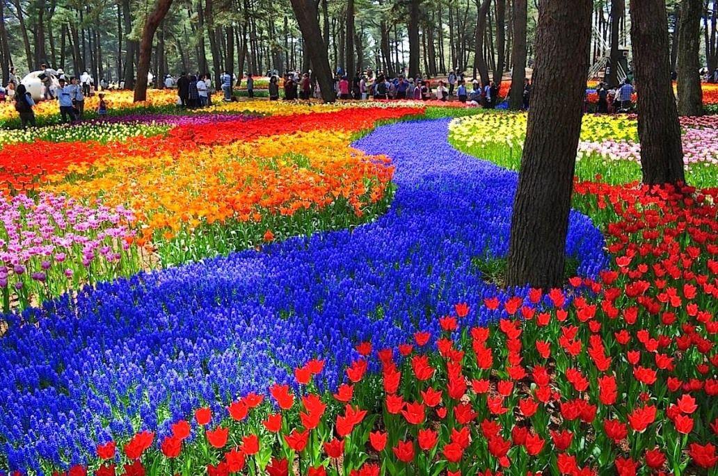 Gambar Taman Bunga Yang Beragam Bunga Taman Kebun