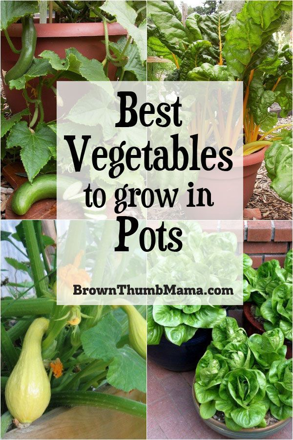 5 Best Container Vegetables for Beginning Gardeners is part of Container gardening vegetables, Growing vegetables, Home vegetable garden, Veggie garden, Container vegetables, Garden veggies - Growing vegetables in containers is easy, especially for beginners! Learn the 5 best veggies for beginning gardeners, planting instructions, and recipes for your harvest