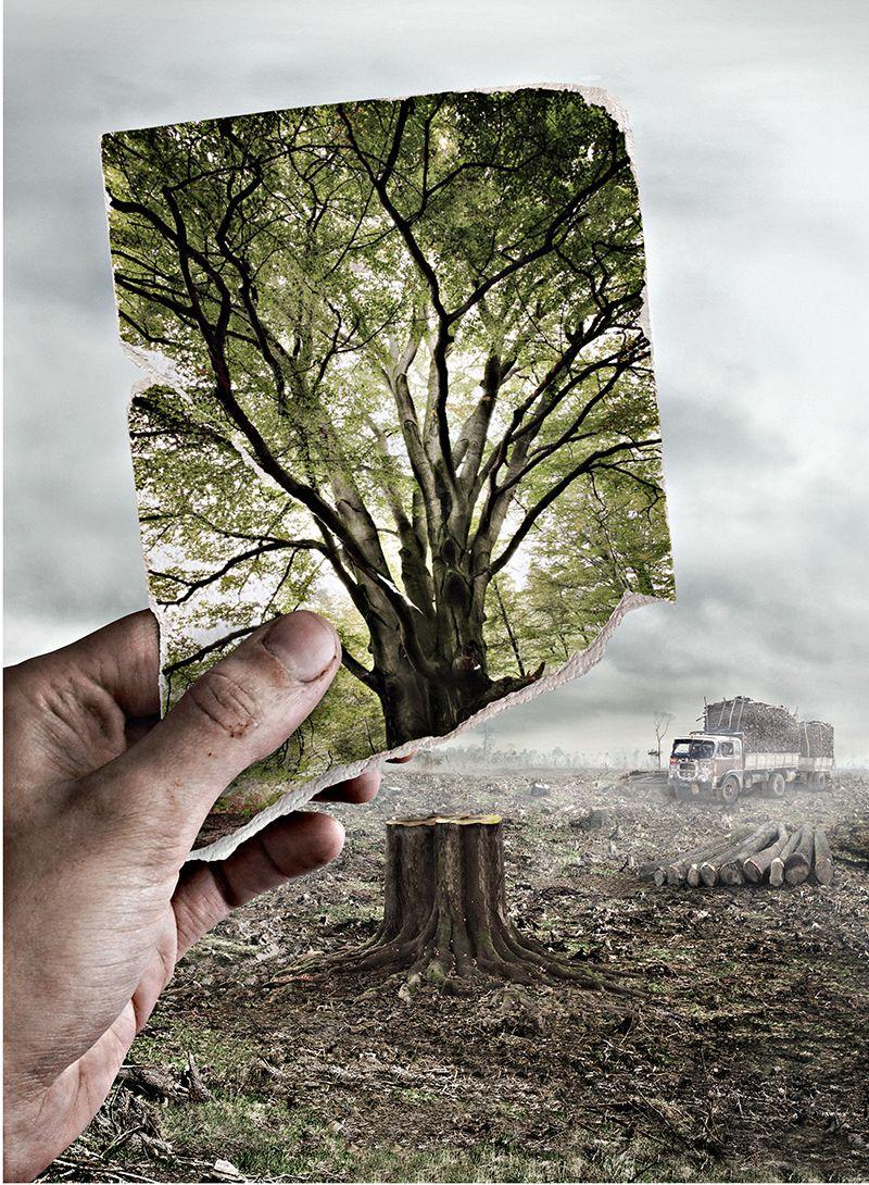 Deforestation. By Helene Andris, Freelance retoucher.