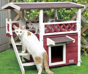 Thisiswhyimbroke The Internet S Mall Outdoor Cat House Animal House Outdoor Cats