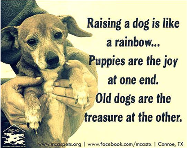 Raising A Dog Is Like A Rainbow Old Dogs Dogs Dog Quotes