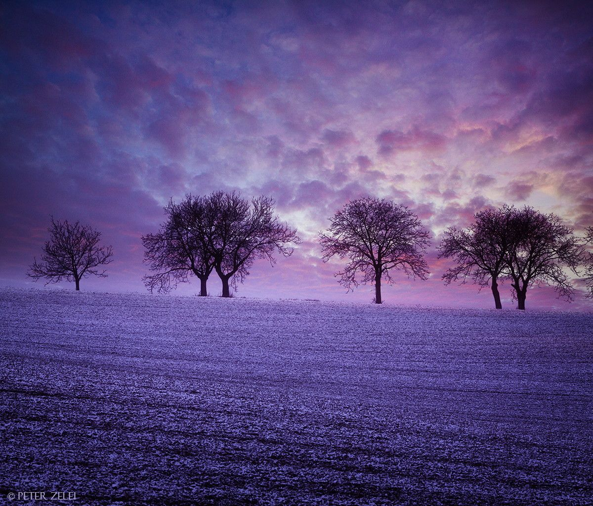 winter dusk landscape ∞