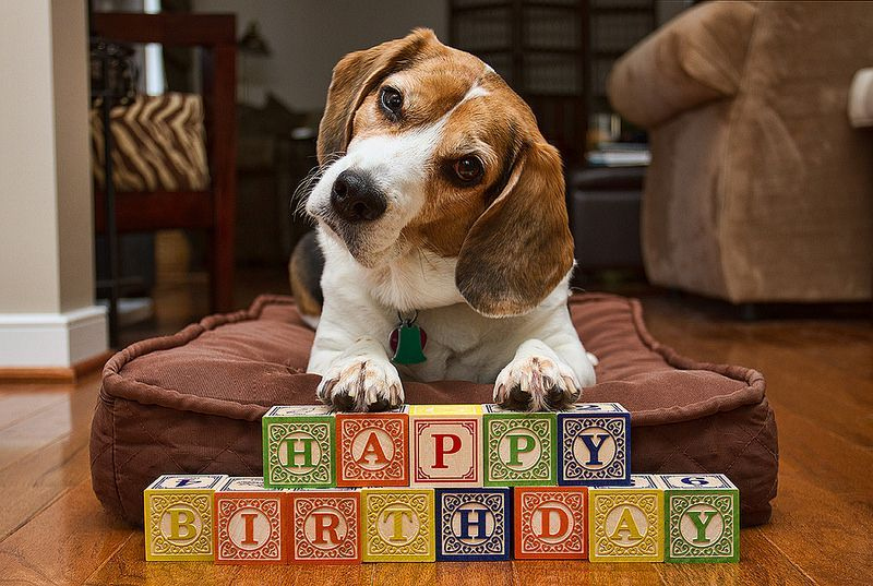 Birthday Beagle Used This For My Mom S Birthday Card Rich