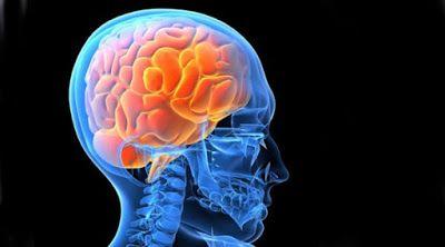 Naučnici potvrdili: Mozak ujutro veći nego navečer | http://www.dnevnihaber.com/2015/06/naucnici-potvrdili-mozak-ujutro-veci-nego-navecer.html