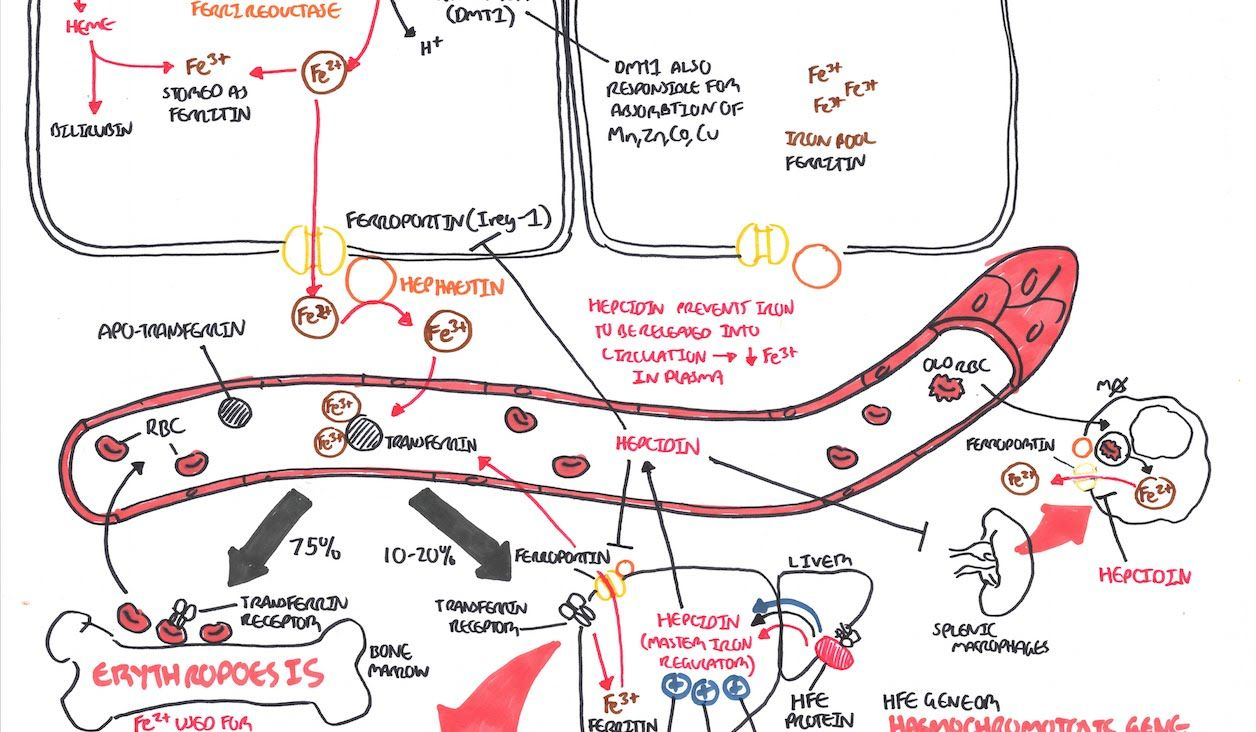 pathogenesis treatment and prevention of pneumococcal pneumonia pdf