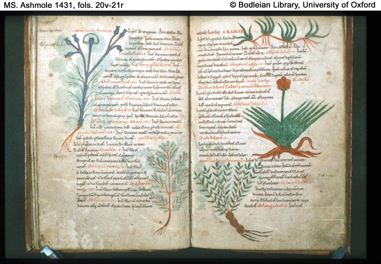 Image result for medieval manuscript opium
