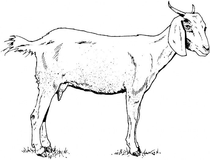 Goat Coloring Page Farm Animal Coloring Pages Animal Coloring Pages Horse Coloring Pages