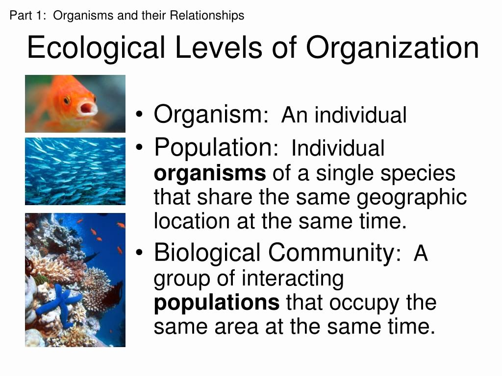 Ecological Ppt In 2021 Ecology Design Ecology Powerpoint Presentation